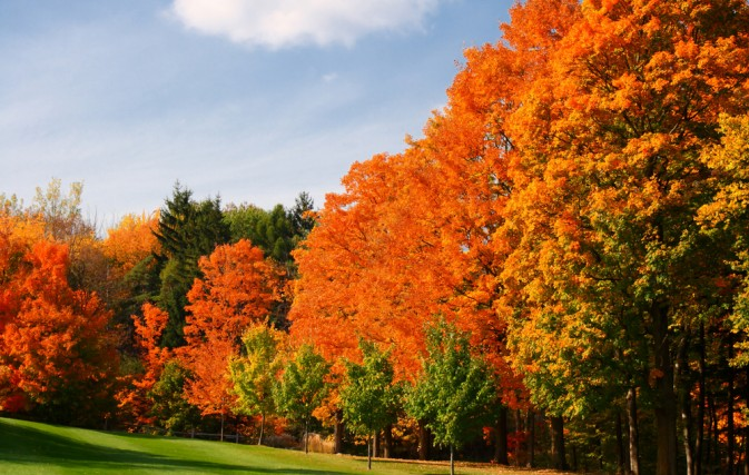 Amtrak Offers Great Dome To See Fall Foliage In Ny