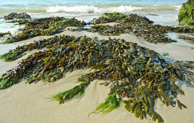 10-Seaweed