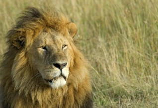 Safari, Africa