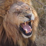Trafalgar offers 'the ultimate Africa experience' with brand new sub-Saharan trips