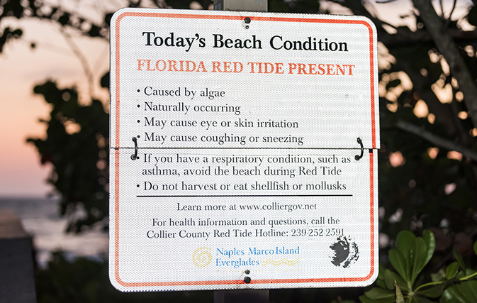 Red Tide Prompts Gov Scott To Direct Us 1 5m In Funds To