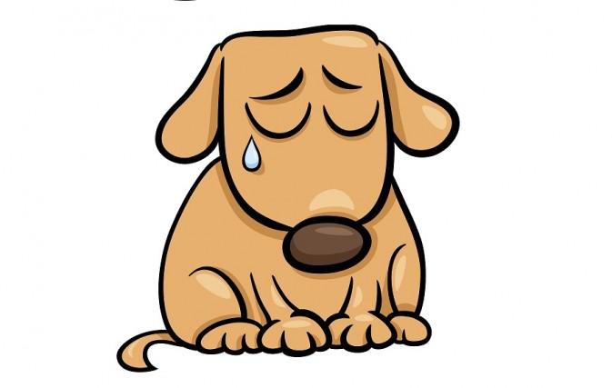 Щенок плачет картинка