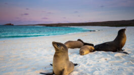 Celebrity Cruises to expand Galapagos cruising
