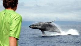Trilogy Excursions Lahaina Whale Watch Tour