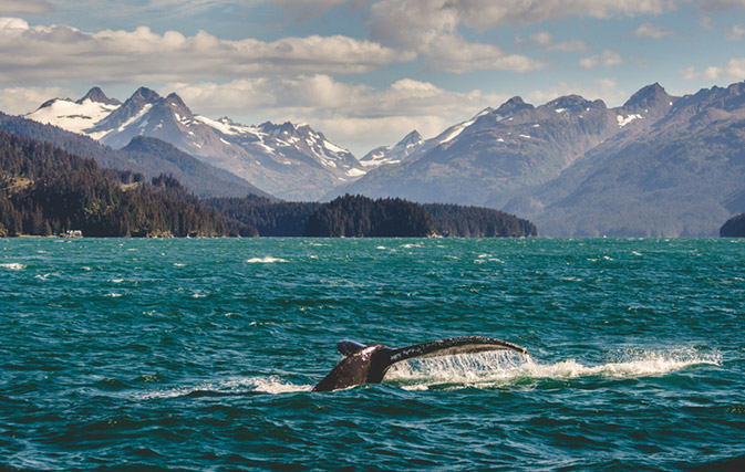 All are invited to board Holland America's virtual voyage to Alaska