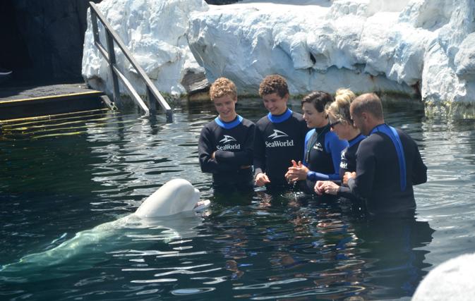 Meeting a beluga whale at SeaWorld San Diego