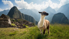 Agents have until Aug. 31 to apply for Intrepid's Peru fam