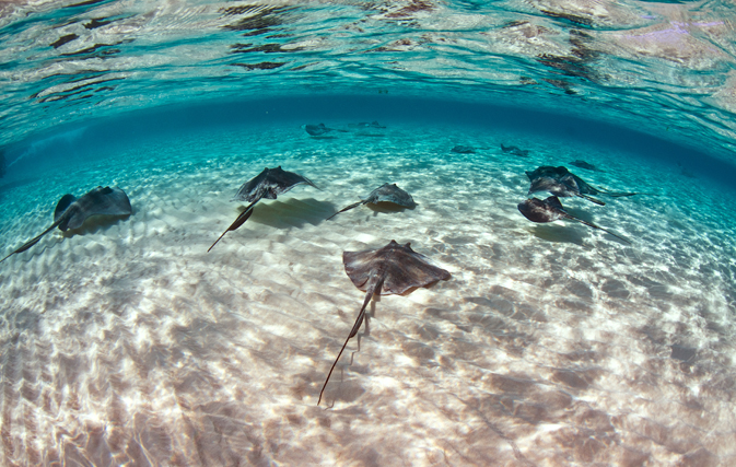 Airline Flights To Grand Cayman Island