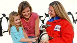 Extended dates for SeaWorld's Canadian Resident Pricing
