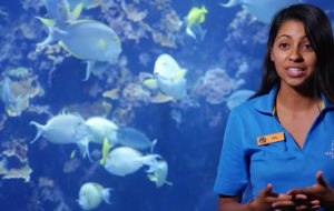 Learn about Hawaii's marine life behind-the-scenes at Maui Ocean Center on HI NOW