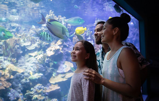 Maui-Ocean-Center-Named-Among-Top-10-Aquariums-in-the-World-3