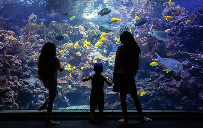 Maui-Ocean-Center-Named-Among-Top-10-Aquariums-in-the-World-6