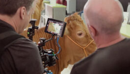 Don't have a cow! WestJet's new video goes against the herd
