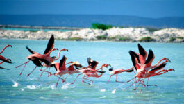 More sun to sell: WestJet adds Bonaire; Transat launches Boxing Day Sale