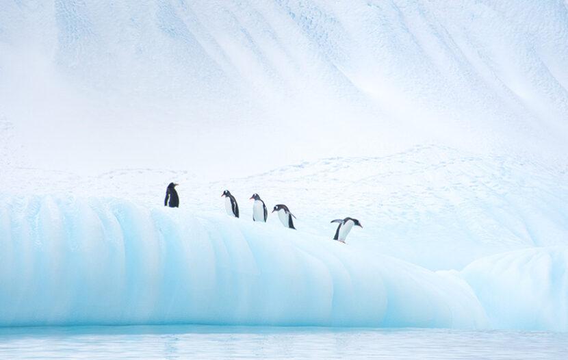 Scenic to resume luxury expeditions to Antarctica